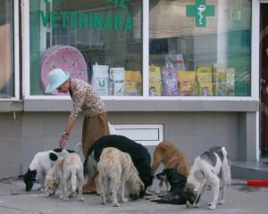 CEDO: Statul roman este responsabil pentru populatia uriasa de caini vagabonzi