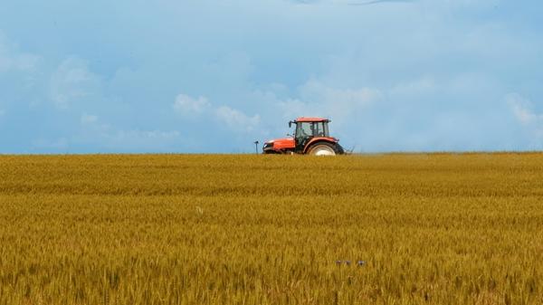Tinerii fermieri pot beneficia de pana la 50 de hectare de teren concesionat din proprietatea statului