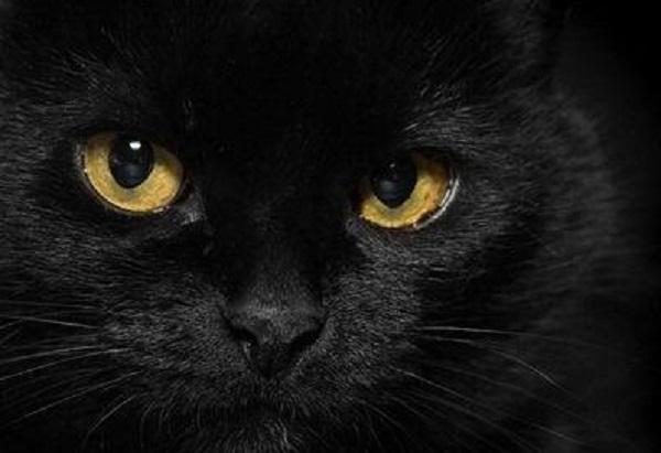 """Chiar e nevoie de militari in pozitiile destinate civililor sau ni se arata, din cand in cand, """"pisica""""?"""