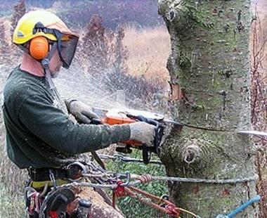 Ce stat din Europa va interzice taierea arborilor timp de zece ani
