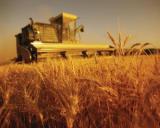 Valeriu Tabara: Scumpirea combustibilului va fi acoperita cu subventii