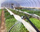 Ministerul Agriculturii: prioritati strategice pentru anul 2016