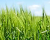 Subventii 2016:  APIA a inceput plata avansului catre fermieri