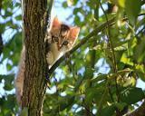 Gelozia -  intre a arunca pisica, in flacari, pe fereastra si a-ti lega fiul de pom, a-l cresta cu cutitul, si a filma toata scena