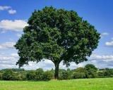 Plus 0,16% la suprafata fondului forestier