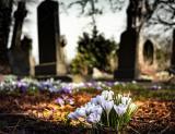 Numarul deceselor provocate de pandemia COVID-19 ar putea fi mult mai mare decat cel din raportarile oficiale