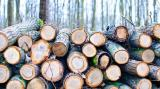 Inca 35 de companii de pe piata lemnului sunt in vizorul Consiliului Concurentei