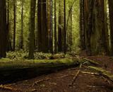 Cazurile de taieri ilegale de arbori au ajuns la aproape 100 pe zi, in 2015