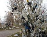 Cati bani se strang din ecotaxa pe pungi si sacose din plastic