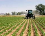 Guvernul a modificat normele privind plata subventiilor in agricultura