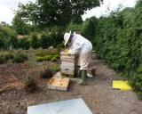 Romania ocupa primul loc in UE la productia de miere