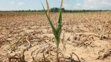 Oros: Romania se confrunta cu cea mai puternica seceta din ultimii 50-60 de ani