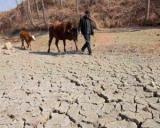Banca Transilvania acorda credite fermierilor care au culturi afectate de seceta