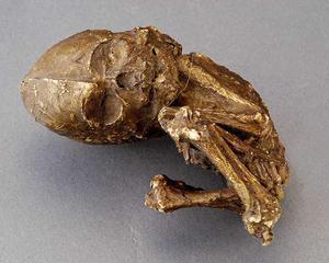 O columbianca octogenara a descoperit ca purta o sarcina de 40 de ani