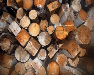 Investitia viitorului este lemnul