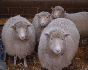 Razboiul Clonelor: PE cere interzicerea produselor de la animale clonate. Consiliul se opune: