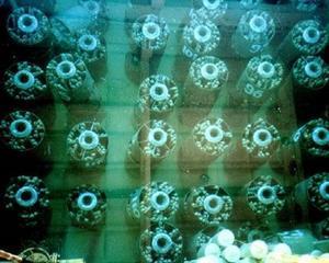 UPDATE JAPONIA: Catastrofa la centrala nucleara de la Fukushima este greu de evitat. Barele de uraniu din trei reactoare se topesc