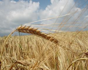 Guvernul introduce taxarea inversa la cereale