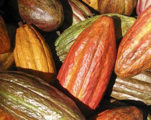 Cat a ajuns sa coste tona de cacao