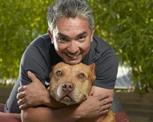 Terapeuti de toate felurile vegheaza animalele de companie