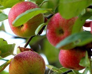 Marul este cel mai consumat fruct din Romania