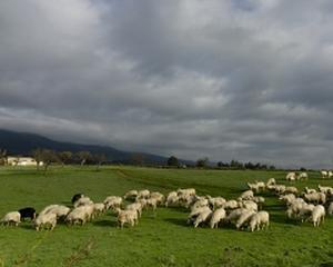 Producatorii agricoli: Tinerii fermieri au nevoie de scutiri de taxe si impozite