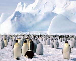 Topirea ghetii din Antarctica, la un nivel alarmant