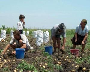 Taranul roman, cel mai lovit de criza agriculturii din UE