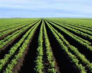 Cum poti sa devii fermier cu bani de la UE