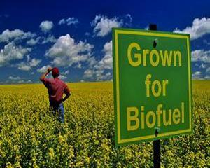 Analizele Manager.ro: Politica UE privind biocombustibilii are consecinte nefaste pentru... Africa