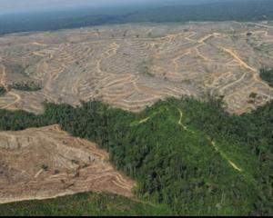 In fiecare minut, Terra pierde 10 hectare de padure!