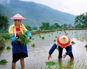 Greenpeace  Productia de ingrasaminte fosfatice din China cauzeaza poluari grave
