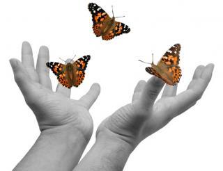 Editorial Alina Negrutiu: Fluturii din pandispan