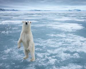Cel mai norocos roman: Pleaca la Polul Nord la bordul unui spargator de gheata. Calatoria il costa 22.790 dolari
