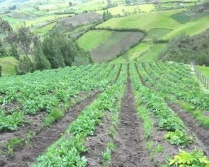 Chinezii cumpara 200.000 de hectare de teren agricol peste hotare