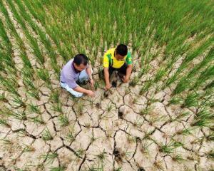 ONU vorbeste despre o noua criza alimentara