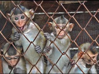 China interzice animalele la circ