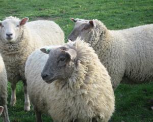 Exporturile de bovine si ovine/caprine au crescut cu 14% in 2010