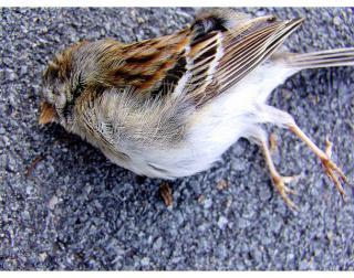 Cercetatorii habar n-au de ce mii de pasari au cazut moarte din cer
