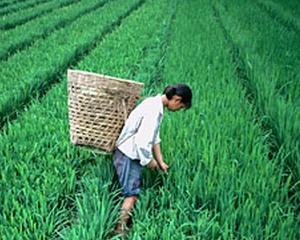 Ministrul agriculturii: Pierderile de productie in agricultura au fost, in medie, de 20% din cauza secetei