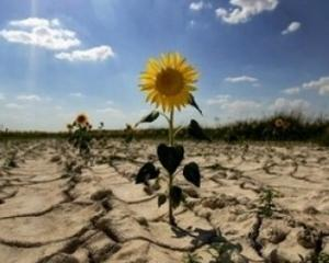 Irigatii: doar 0,5% din 200.000 de hectare