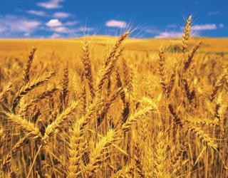 Ministrul Agriculturii: Romania nu va intra intr-o criza a alimentelor