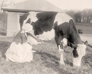STUDIU: Piata produselor lactate din Romania va continua sa se scada in urmatorii ani
