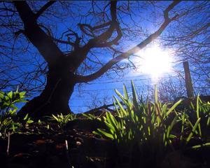 Echinoctiul de primavara. Incepe primavara astronomica