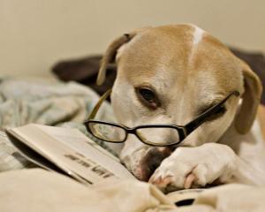 10 animale si carierele lor... de invidiat