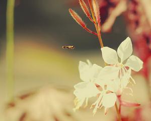 Descoperire extraordinara: Florile din Australia evolueaza in functie de preferintele albinelor