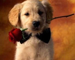 SPECIAL: Industria Valentine's Day in SUA