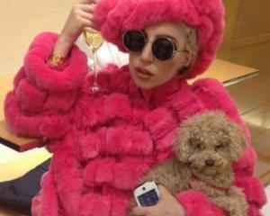Lady Gaga a cerut TV, Internet si flori albe fara miros