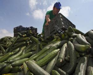 E.coli in cifre: 9 milioane de euro pagube create legumicultorilor romani