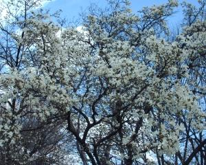Biroul verde: Cum putem lasa copacii sa creasca